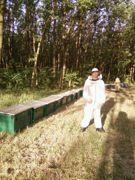 Méhészet kezdőknek videók